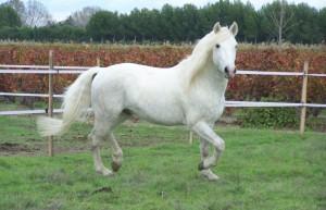www.chevalcamargue.fr : LE site internet incontournable pour la saillie !